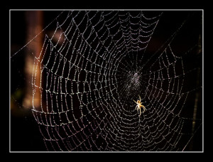 """Itsy Bitsy Spider"" (also known as ""Incy Wincy Spider"", ""Eency Weency Spider"", ""Inky Binky Spider"", ""Inky Dinky Spider"", ""Ipsy Wispy Spider"", ""Ipsy Dipsy Spider"" or ""Itchy Wincy Spider"")"